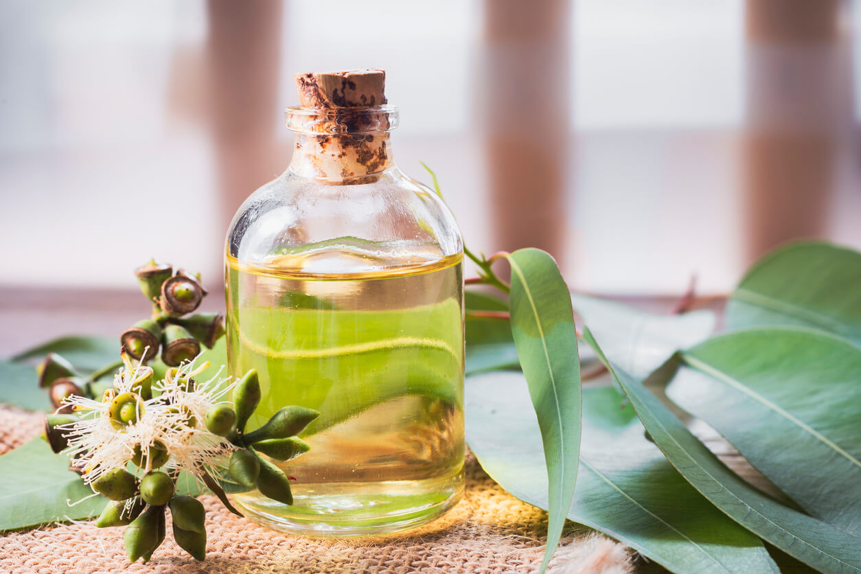 Best Eucalyptus Essential Oil – Benefits and How to use Them